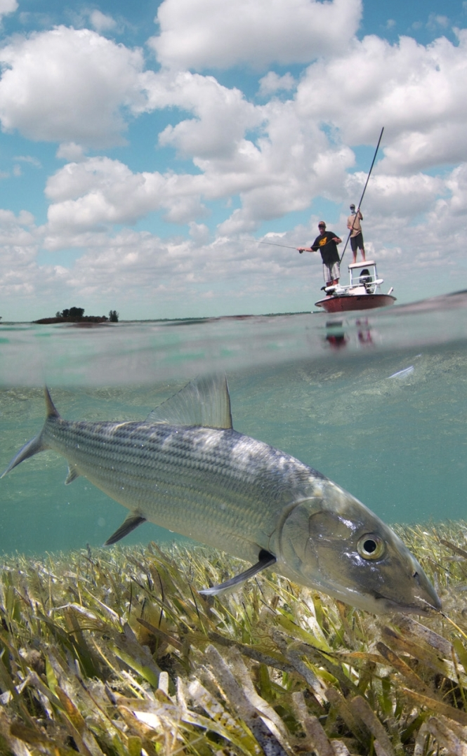 AdrianGray_bonefish