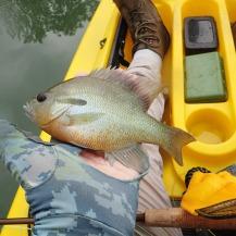 Q and a nice sunfish
