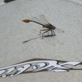 Dragonfly on the hatch