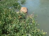 Dead deer in the water